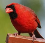 bird-3352153_1920
